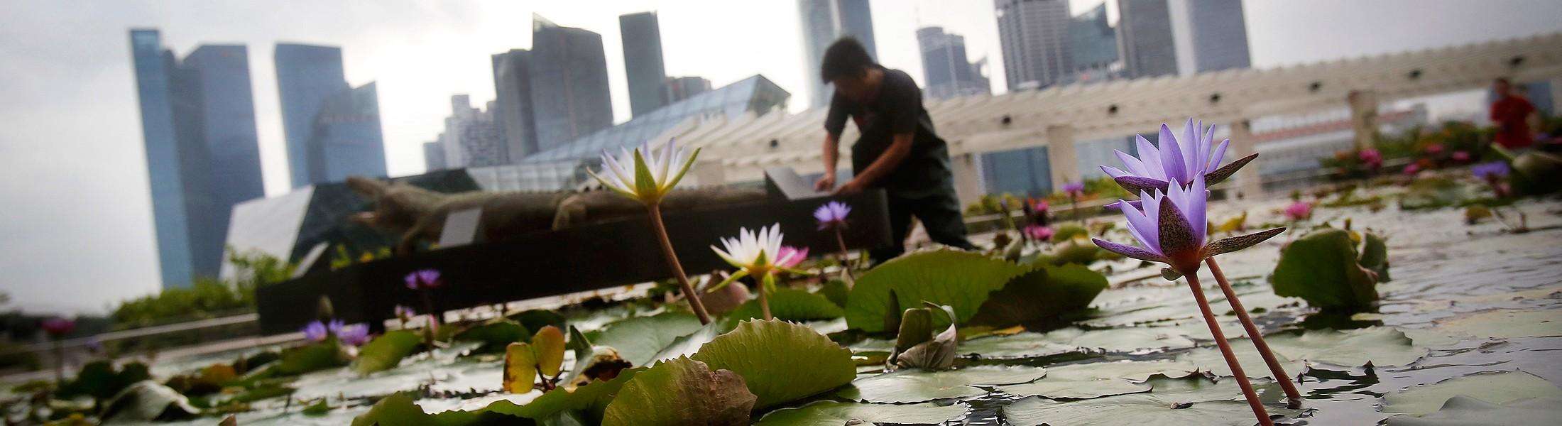 Что скрывается за идеальностью Сингапура