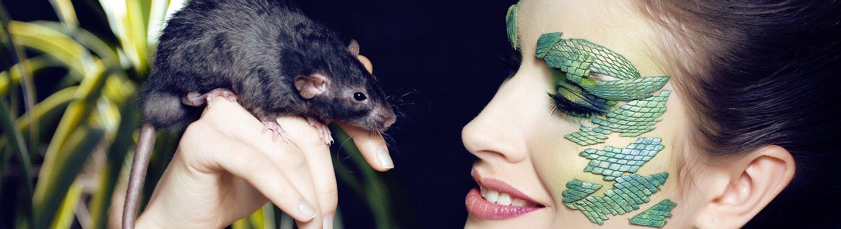 Cuando convertí ratones en corredores de bolsa
