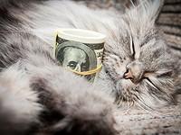 Lecciones de inversión que le puede enseñar un gato