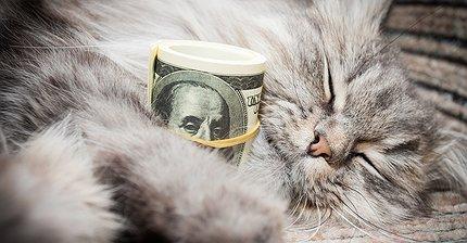 Как котики могут научить вас инвестированию