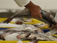 Как треска и санкции сделали мурманского рыбака миллиардером