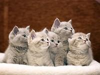 Котики улучшают вашу работоспособность
