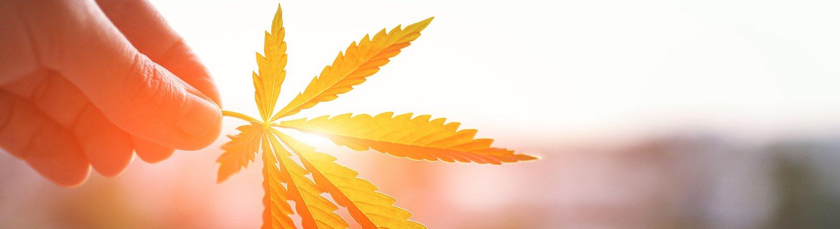 Una cittadina in California è stata comprata per diventare un'attrazione turistica dedicata alla marijuana