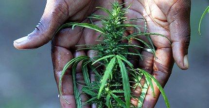6 причин держаться подальше от инвестиций в марихуану