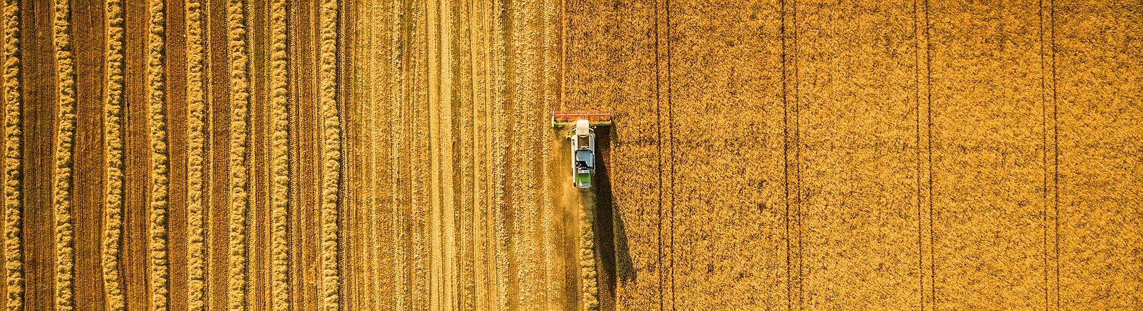 EUA divulgam amanhã relatório mensal sobre colheitas
