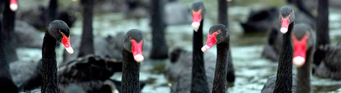 13 «черных лебедей» нефтяного рынка