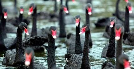 13 'cisnes negros' que podrían afectar al mercado del petróleo en 2017