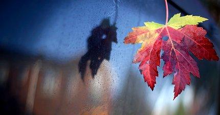 5 лучших инвестиционных возможностей сентября