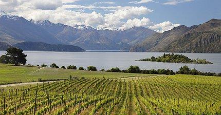 От Европы до Австралии: Путеводитель по лучшим винодельням мира