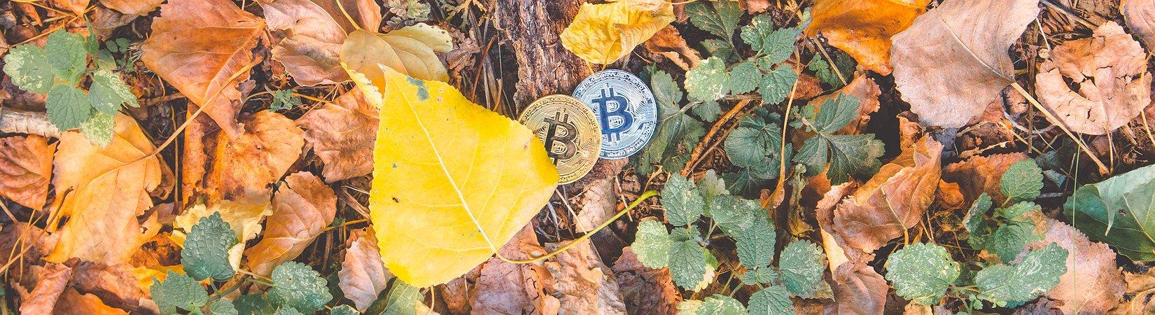 تعرف على  Bitcoin Gold: ما الذي يجب أن نعرفه عن العملة المشفرة الجديدة