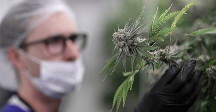 В чем главная угроза для перегретых рынков криптовалют и марихуаны