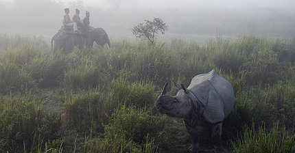 «Серые носороги» атакуют экономику Китая