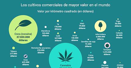 Infografía: Los cultivos comerciales de mayor valor en el mundo