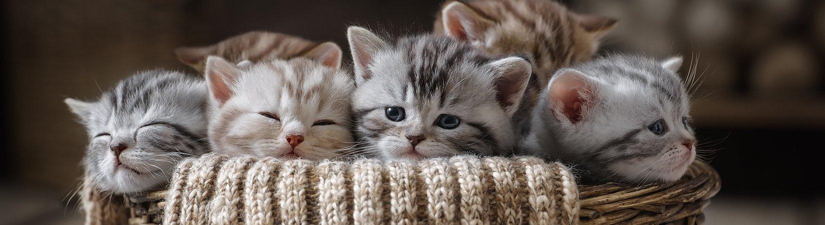 La aplicación más popular de ethereum es un juego de gatos
