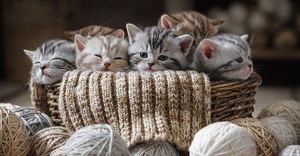 Самым популярным Ethereum-приложением стала игра с котиками