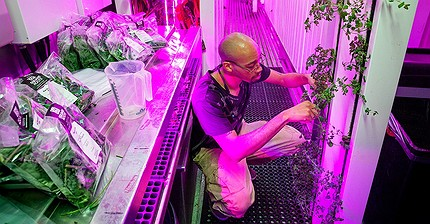 В интересах революции: Зачем брат Маска растит салат в контейнере